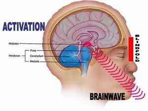 midbrain-activation
